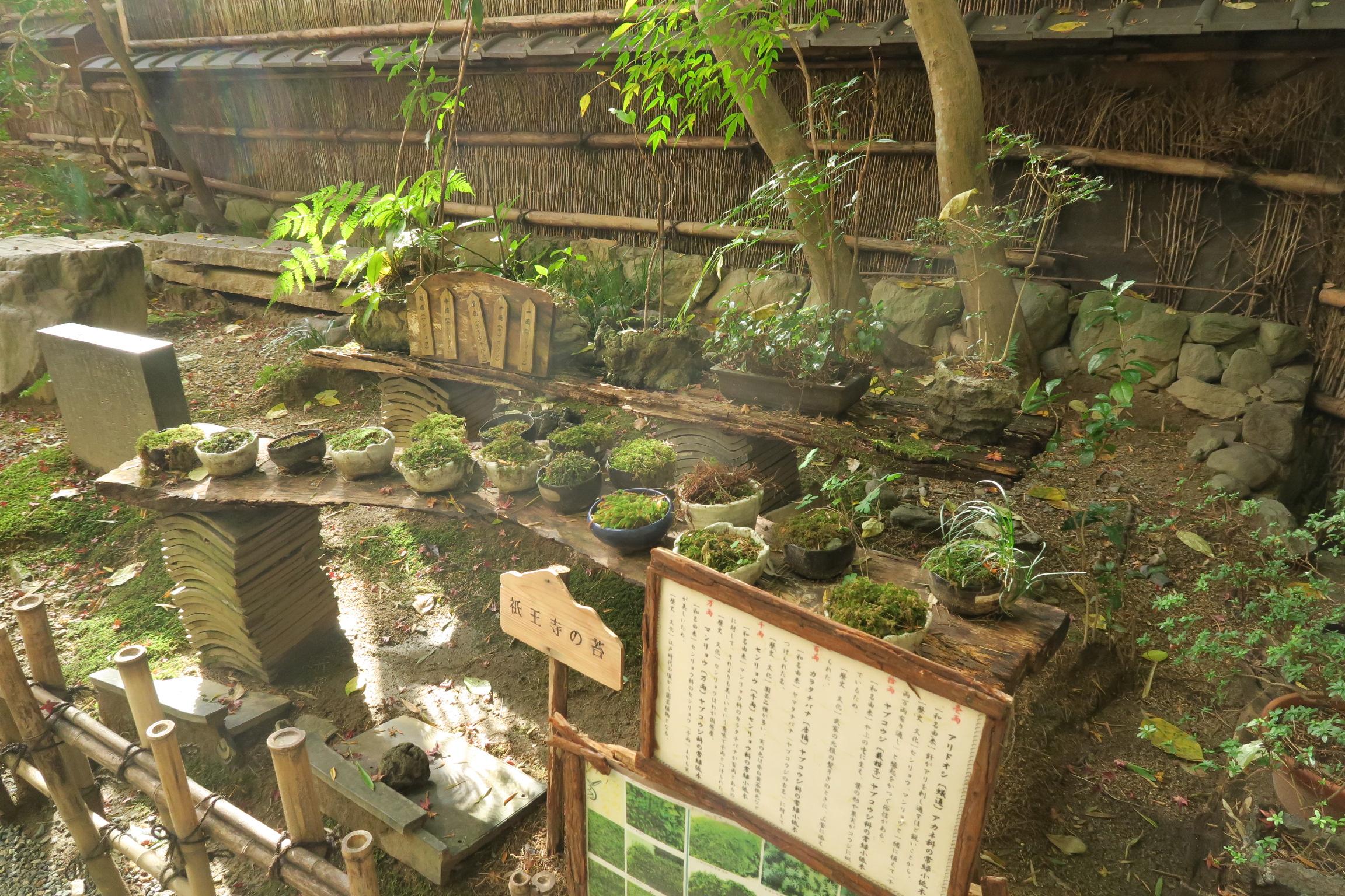 祇王寺のお庭にある苔の種類がわかるよう展示されてました。