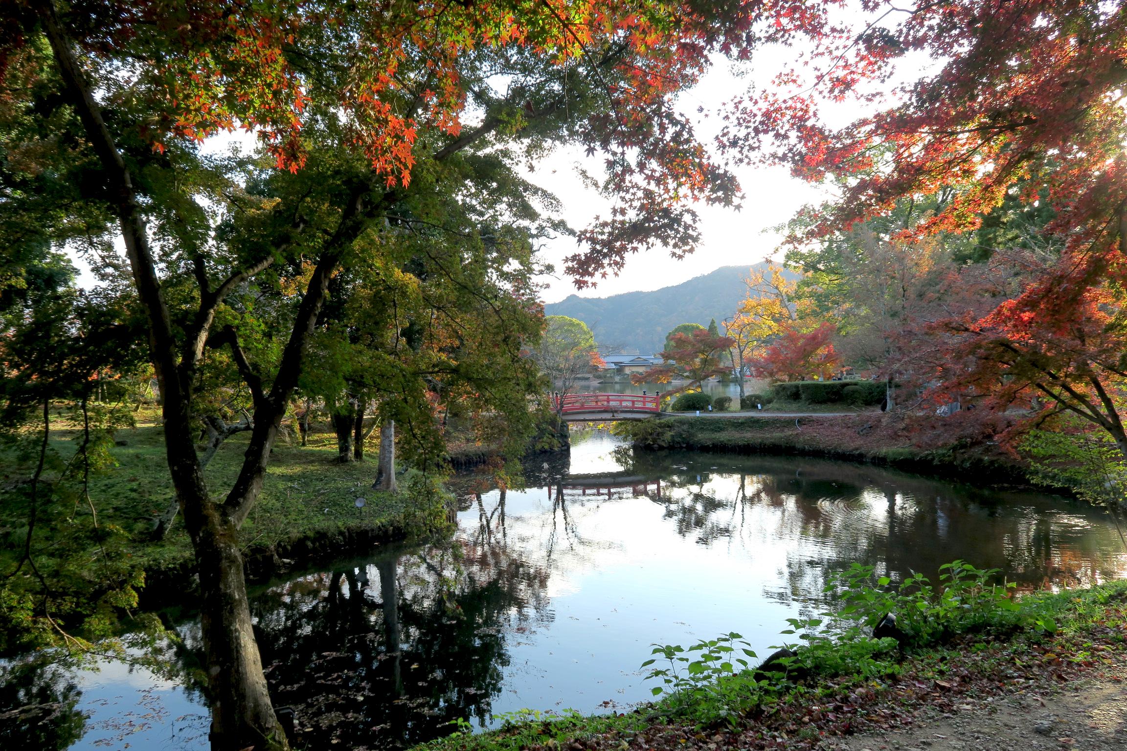 大沢池に夕日が当たり、美しい光景でした。