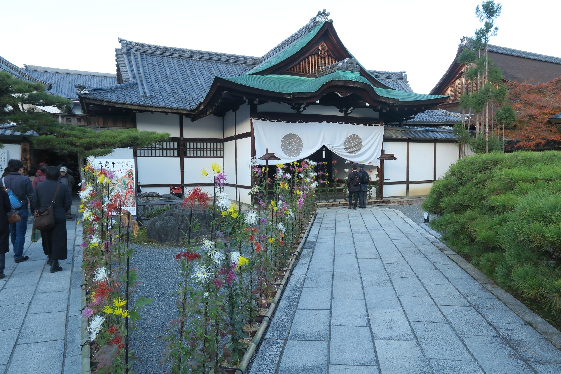 大覚寺の嵯峨菊は、大沢池に自生していた野菊を永年にわたって美しく仕立てられた菊です。