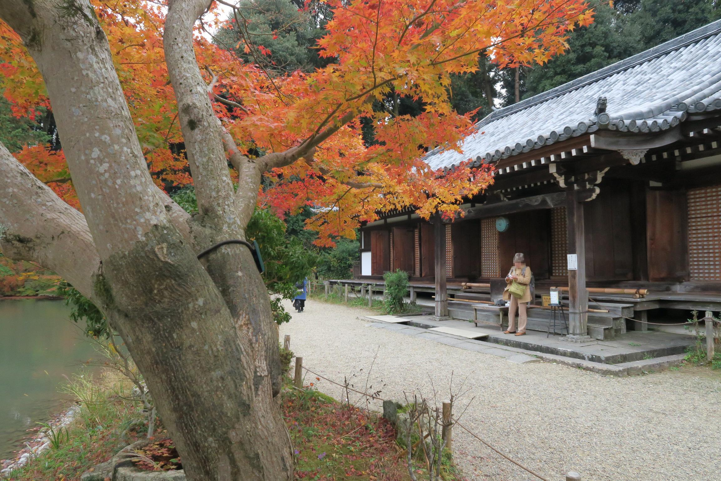 本堂。9体の阿弥陀如来像を安置していることから九体寺(くたいじ)とも。紅葉もきれいでした!