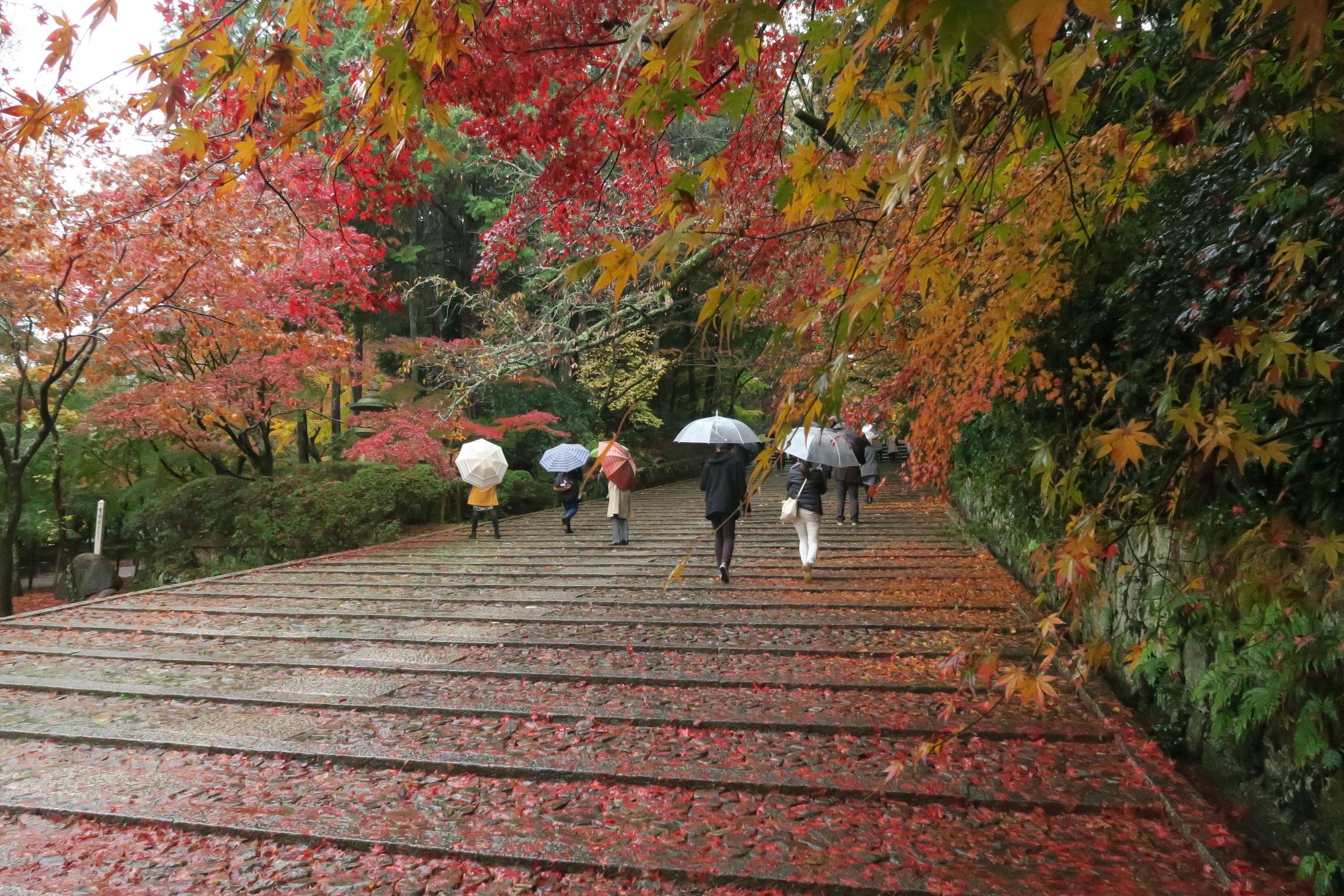 多くの人が訪れているため、表参道(女人坂)の葉はつぶれています(苦笑)