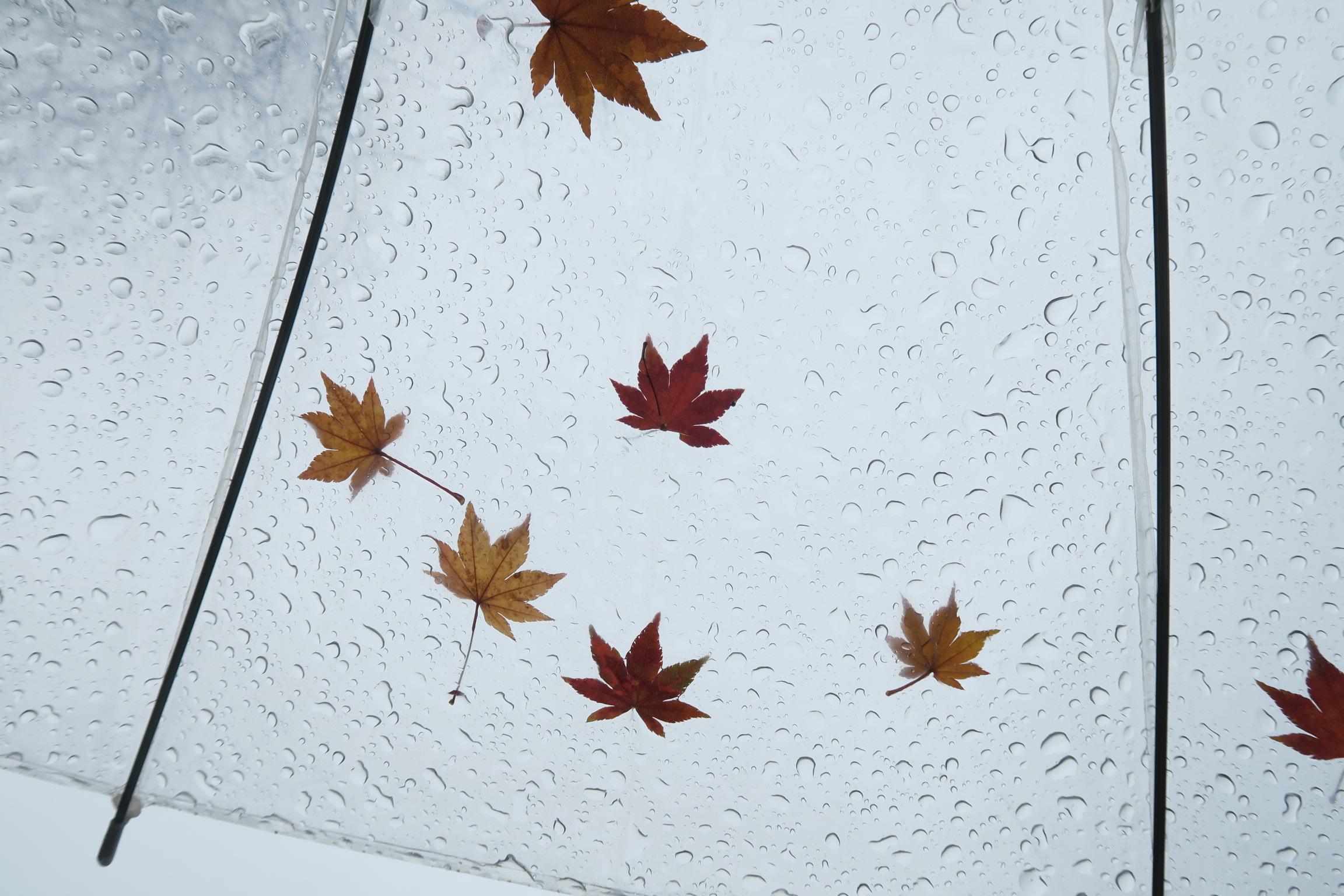ビニール傘に紅葉の葉を付けてみました!傘をたたんでも取れませんよ。