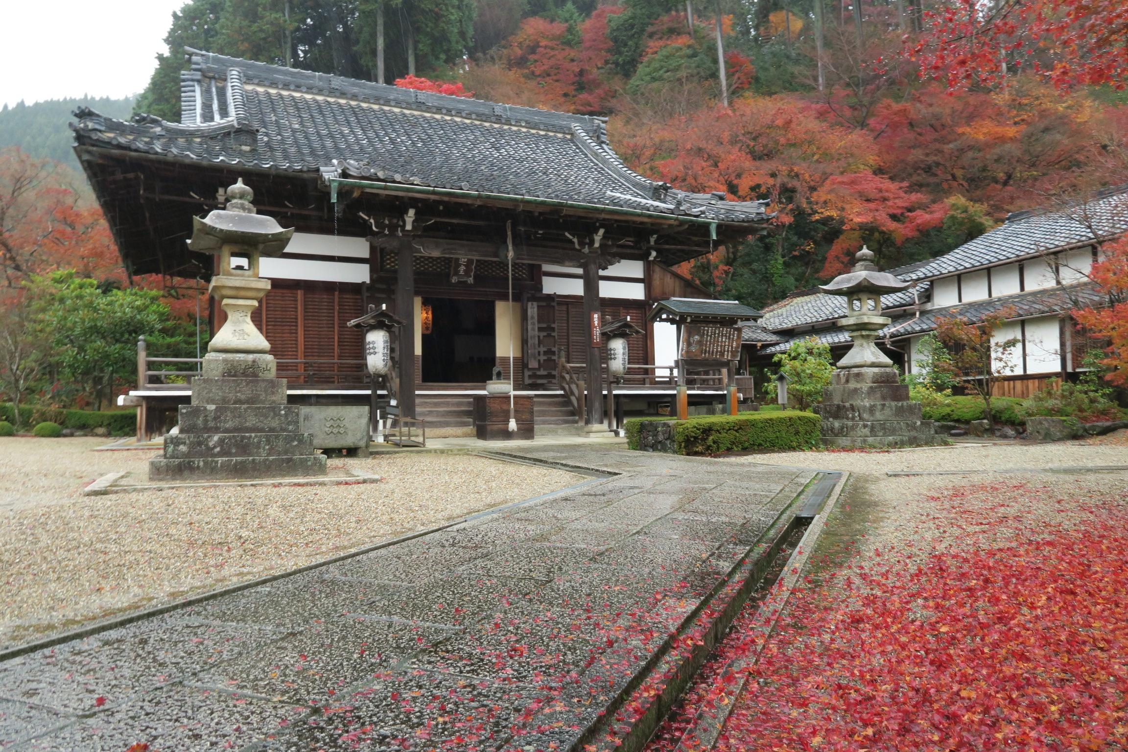 釈迦堂周辺の紅葉も見事!