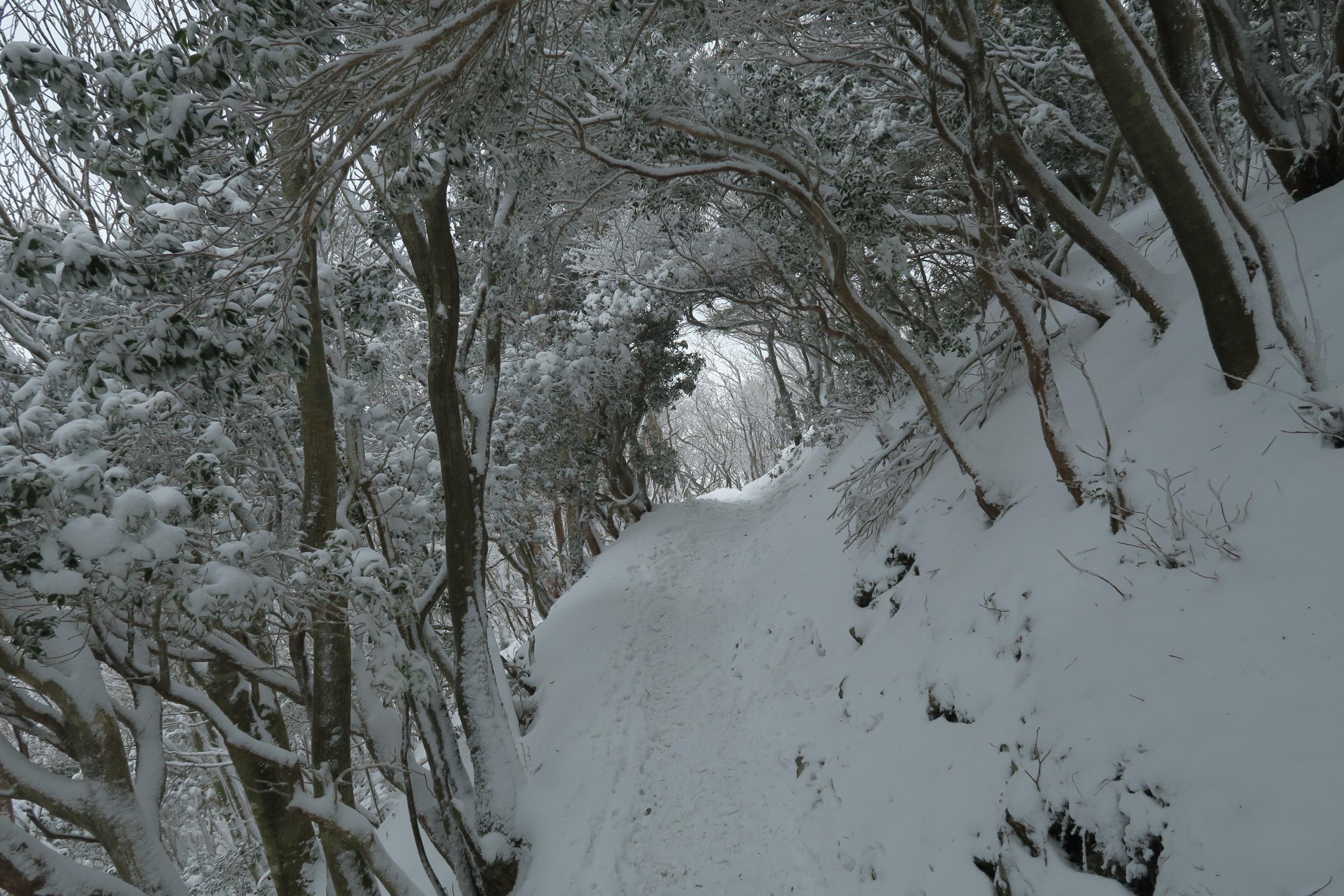 樹氷のトンネル。ここは斜面が風避けにもなり、助かります。