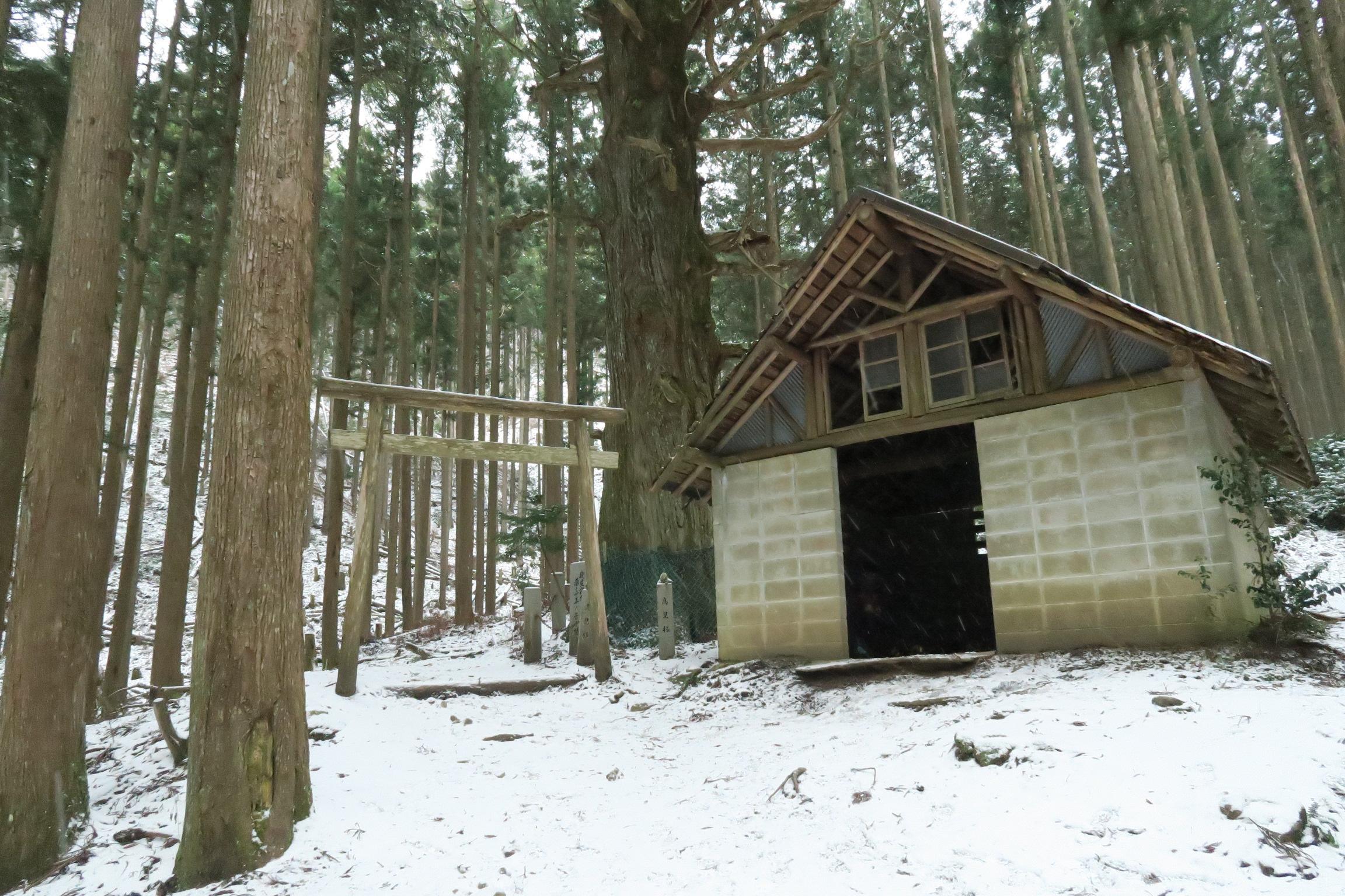 高見杉の横の山小屋です。状態にもよりますが、ここでアイゼンを装着します。