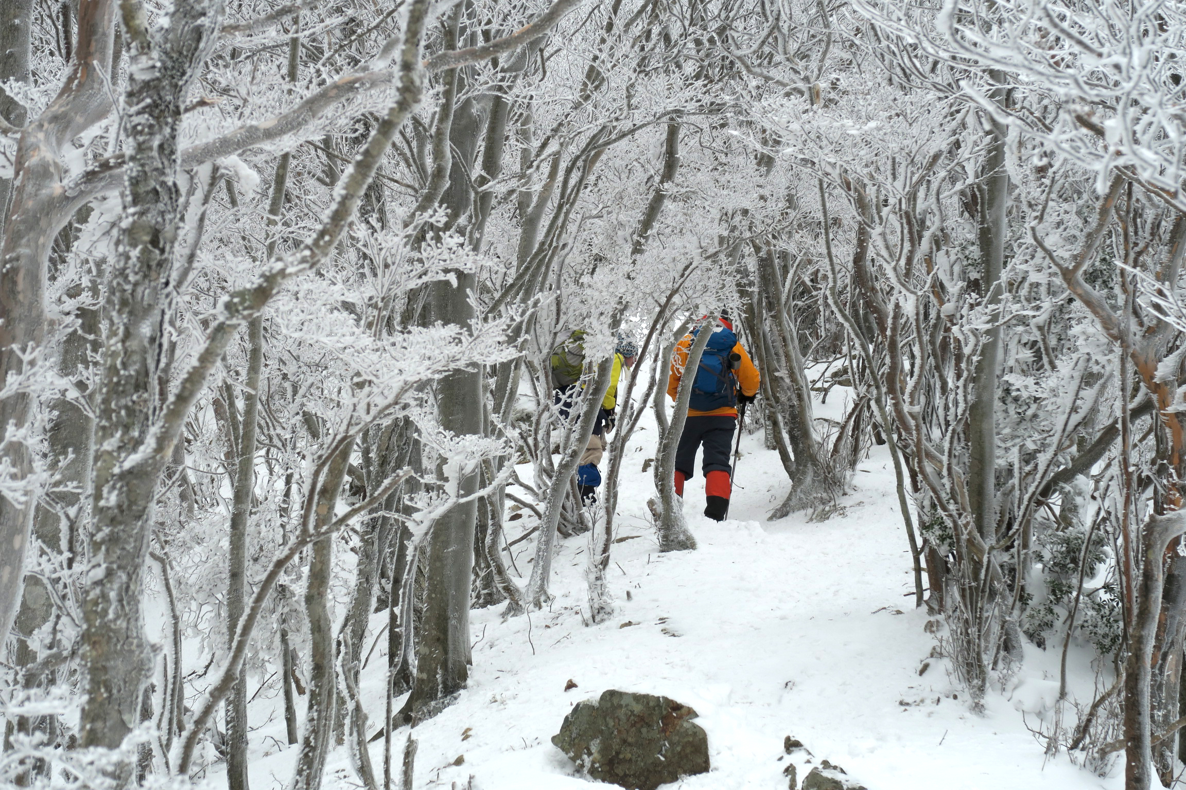 樹氷のトンネル。きれいですね。