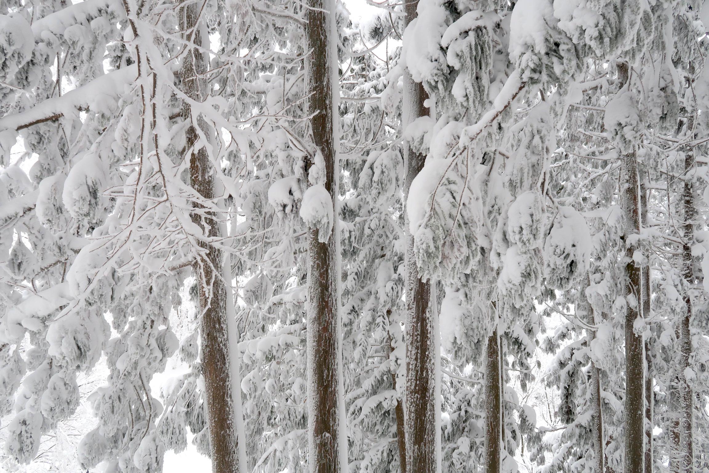 とにかくすごい雪の量でした!