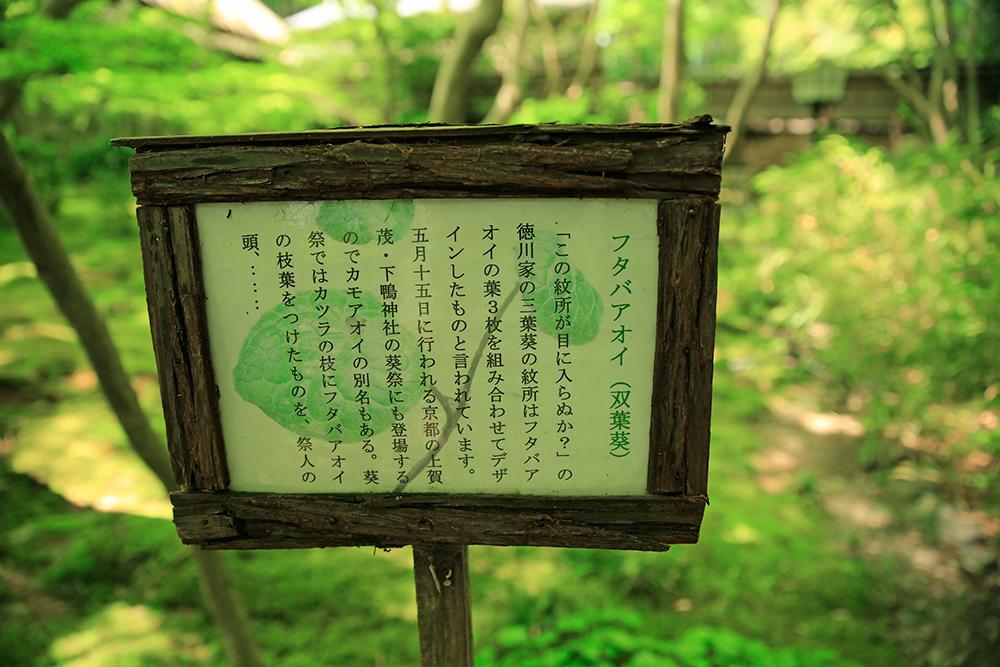 「この紋所が目に入らぬか」 徳川家の紋所はフタバアオイの葉を3枚組み合わせたデザインと言われています