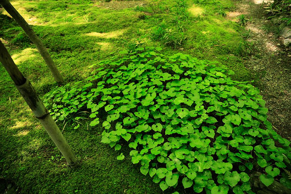 徳川家は、上賀茂神社の神紋であった葵を正式な家紋としたことから、上賀茂神社出身とも言われています。