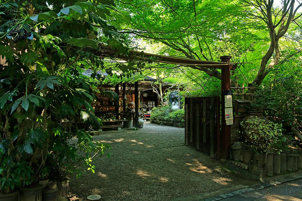 新緑に包まれ雰囲気のある信楽焼・窯元「小陶苑」。かわいいタヌキが出迎えてくれます!