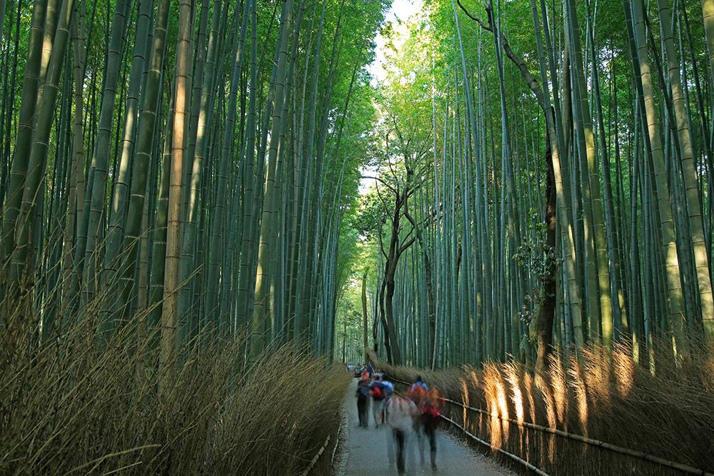 嵐山でも有名な観光スポット「竹林の小径」です。