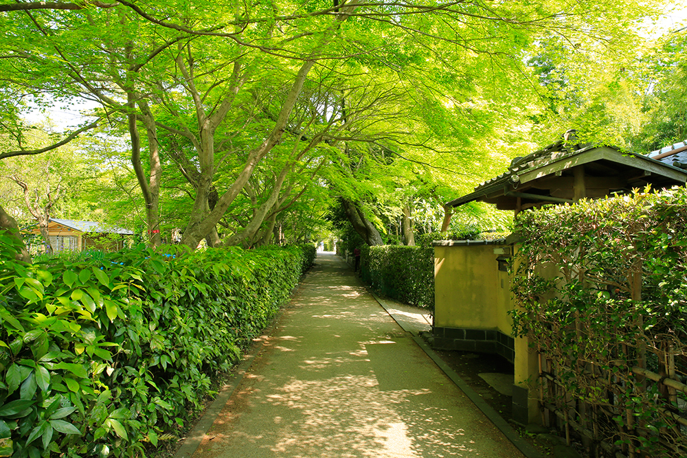 京都・嵐山の小径は雰囲気があっていいですね。木漏れ日の映る風景も素敵です。