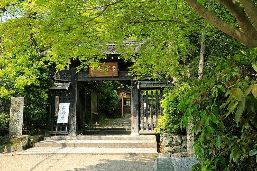 常寂光寺で牡丹展が開催されてますね。