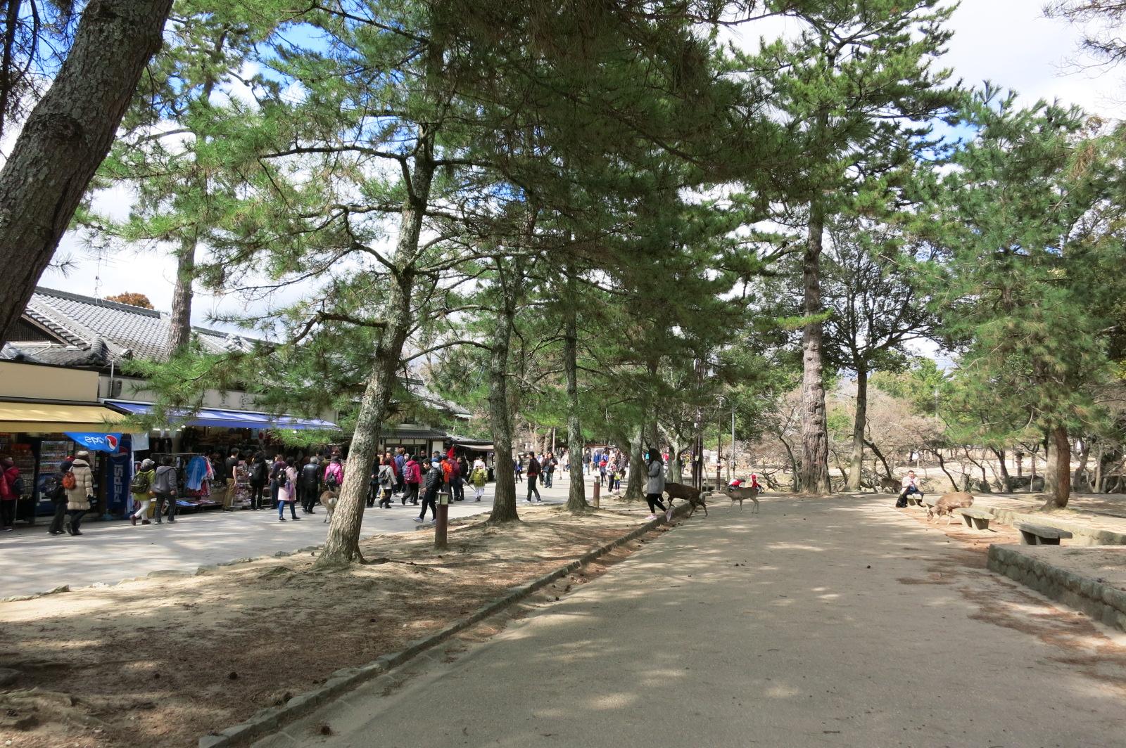 「大仏殿春日大社前」のバス停を降りて、東大寺の参道を歩き、