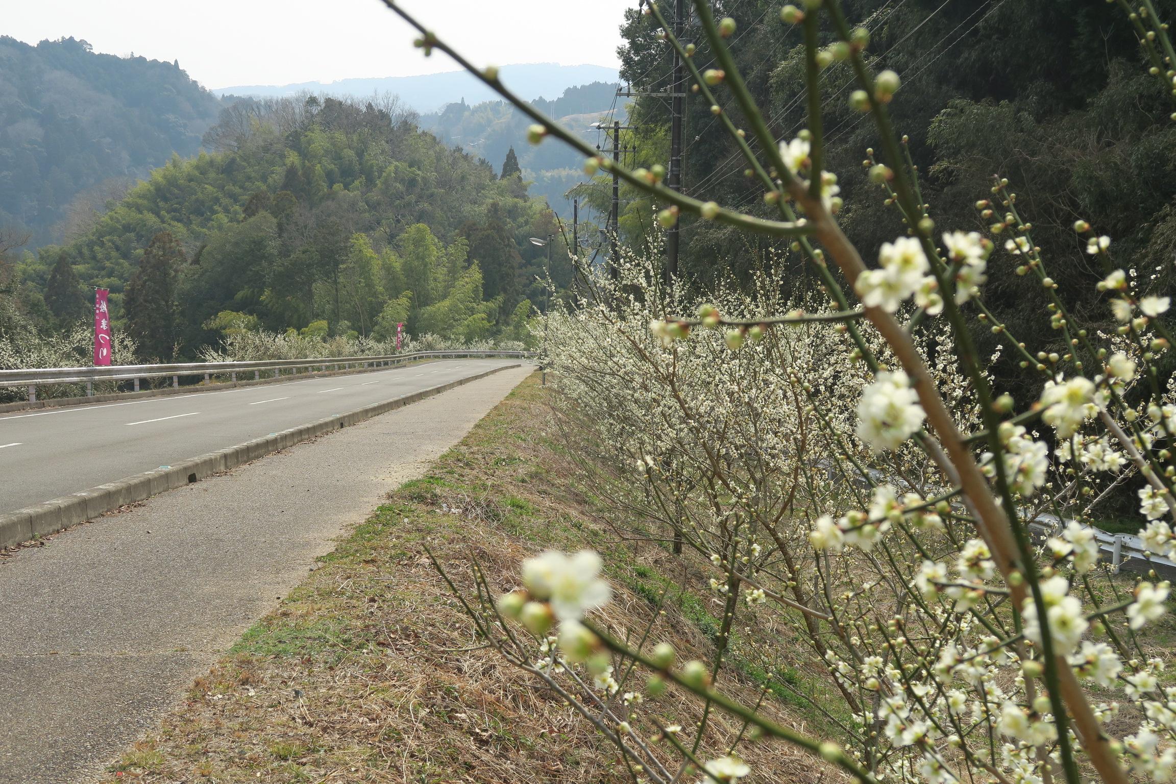 県道214号。歩道も整備されていて安心。景色は川沿いの県道82号が良かったです。(歩道なし)