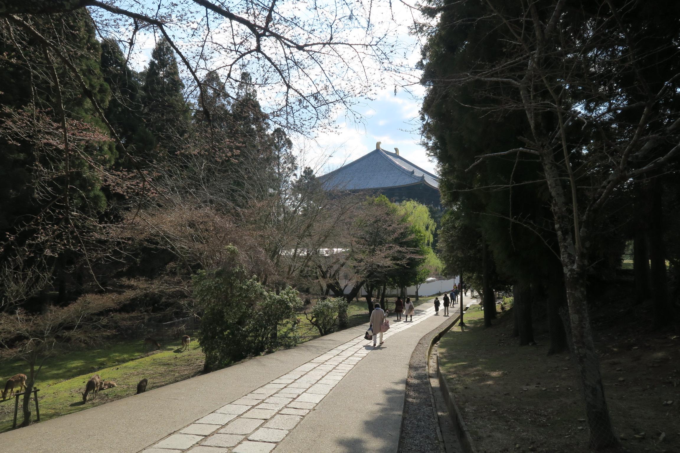大仏殿の北側に位置する道は週末でも人が少なく歩きやすいです。