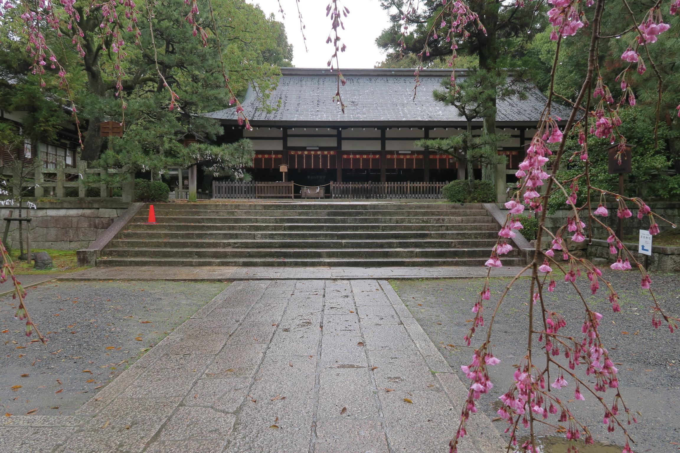 宗忠神社の拝殿。桜は5分咲きでした。