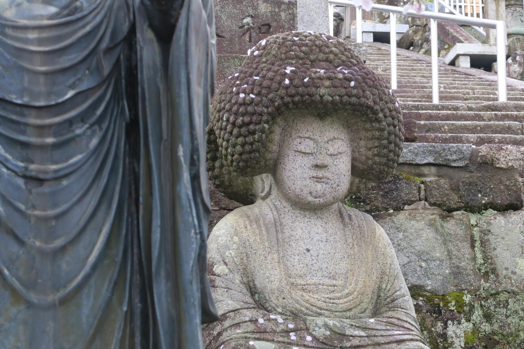金戒光明寺で有名なアフロヘアの石仏。桜の花びらがアフロヘアに。。。