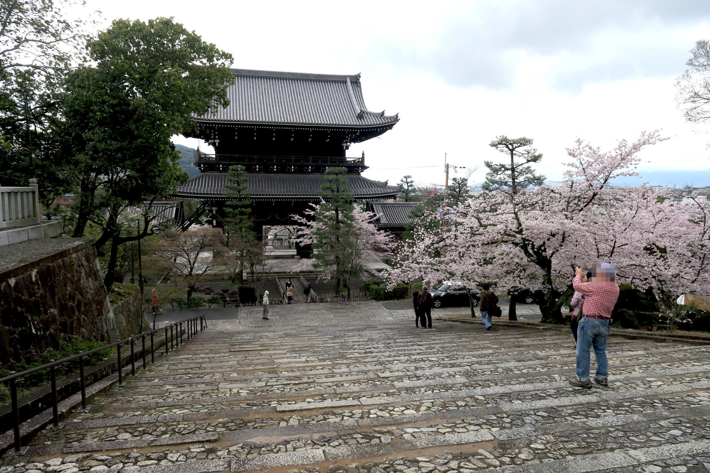 間口約15m、高さ約23mの立派な山門。応仁の乱で焼失しましたが、1860年に再建。桜も満開でした。
