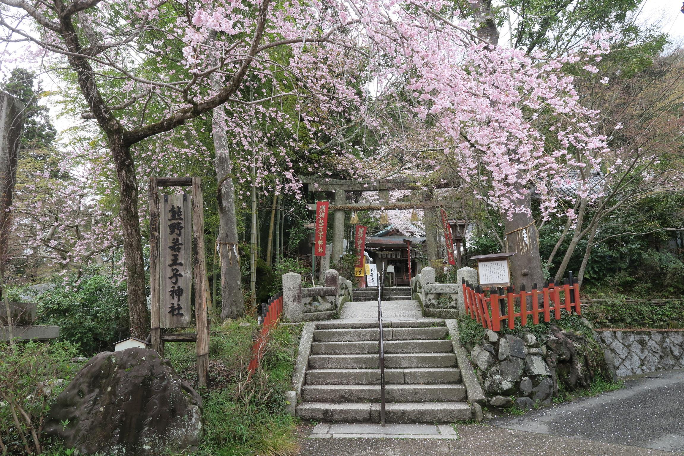 熊野若王子神社。4月の第一日曜日には、10時~10時40分まで桜花祭典が行われ、賑わいます。