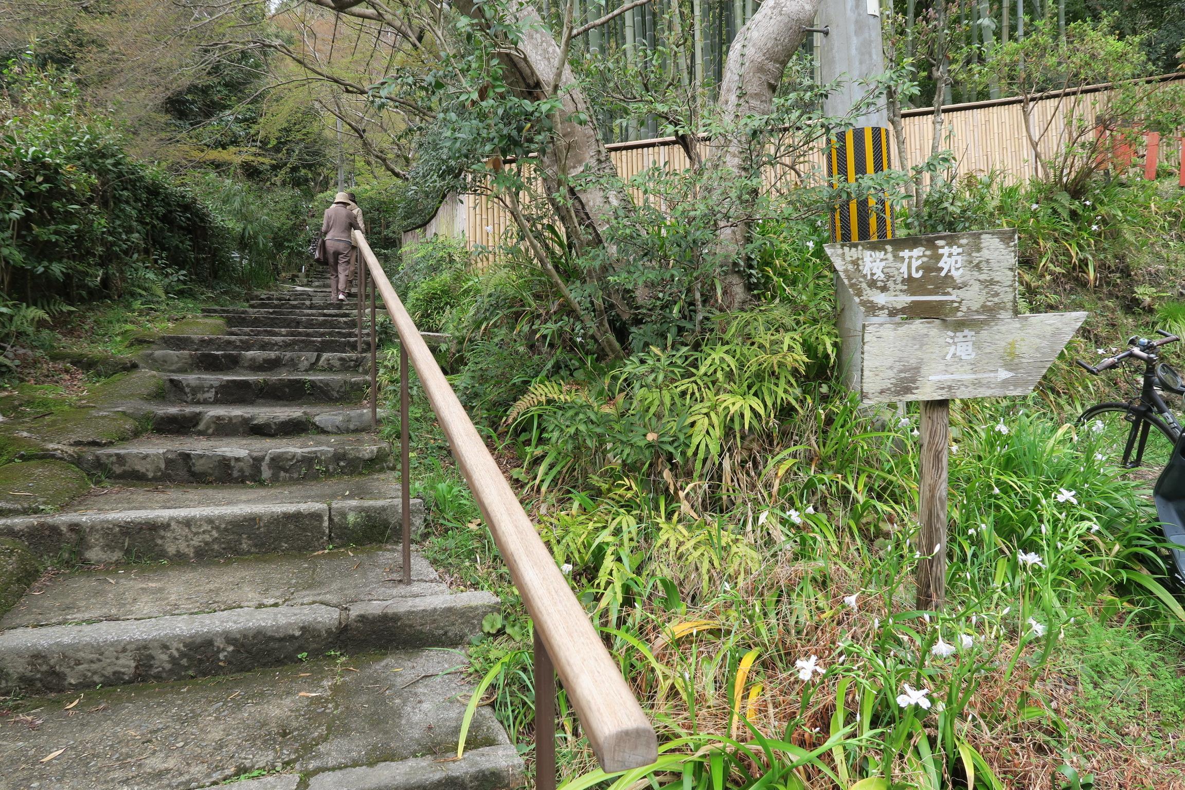 若王子神社の奥に「桜花苑」があるというので行ってみました。