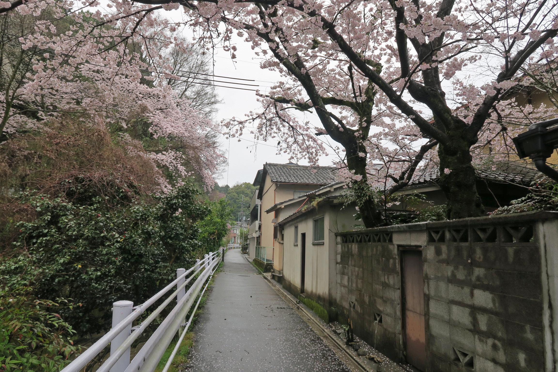 岡崎神社から真如堂に向かう途中の道にも桜が咲いています。右手のお宅の桜も見事でした。