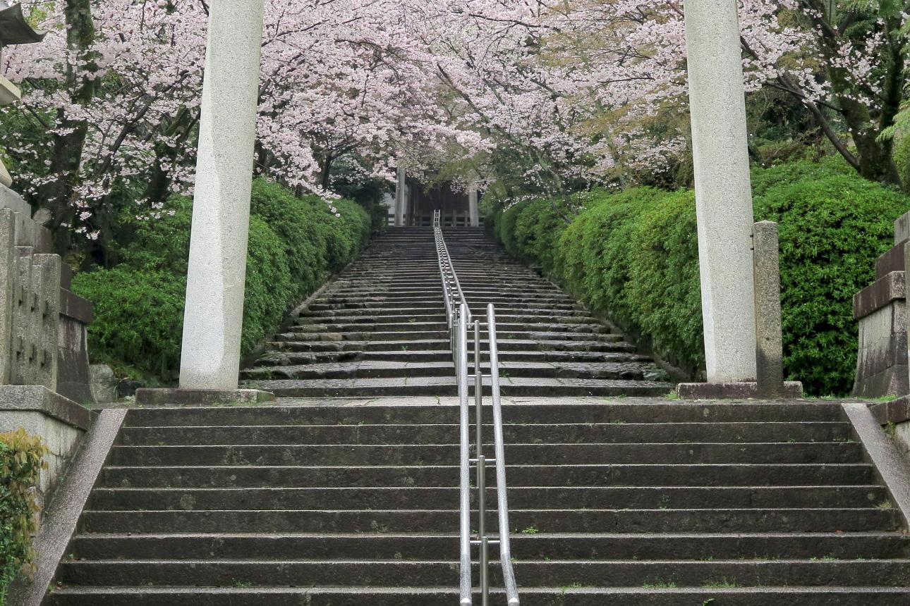 宗忠(むねただ)神社の桜トンネル