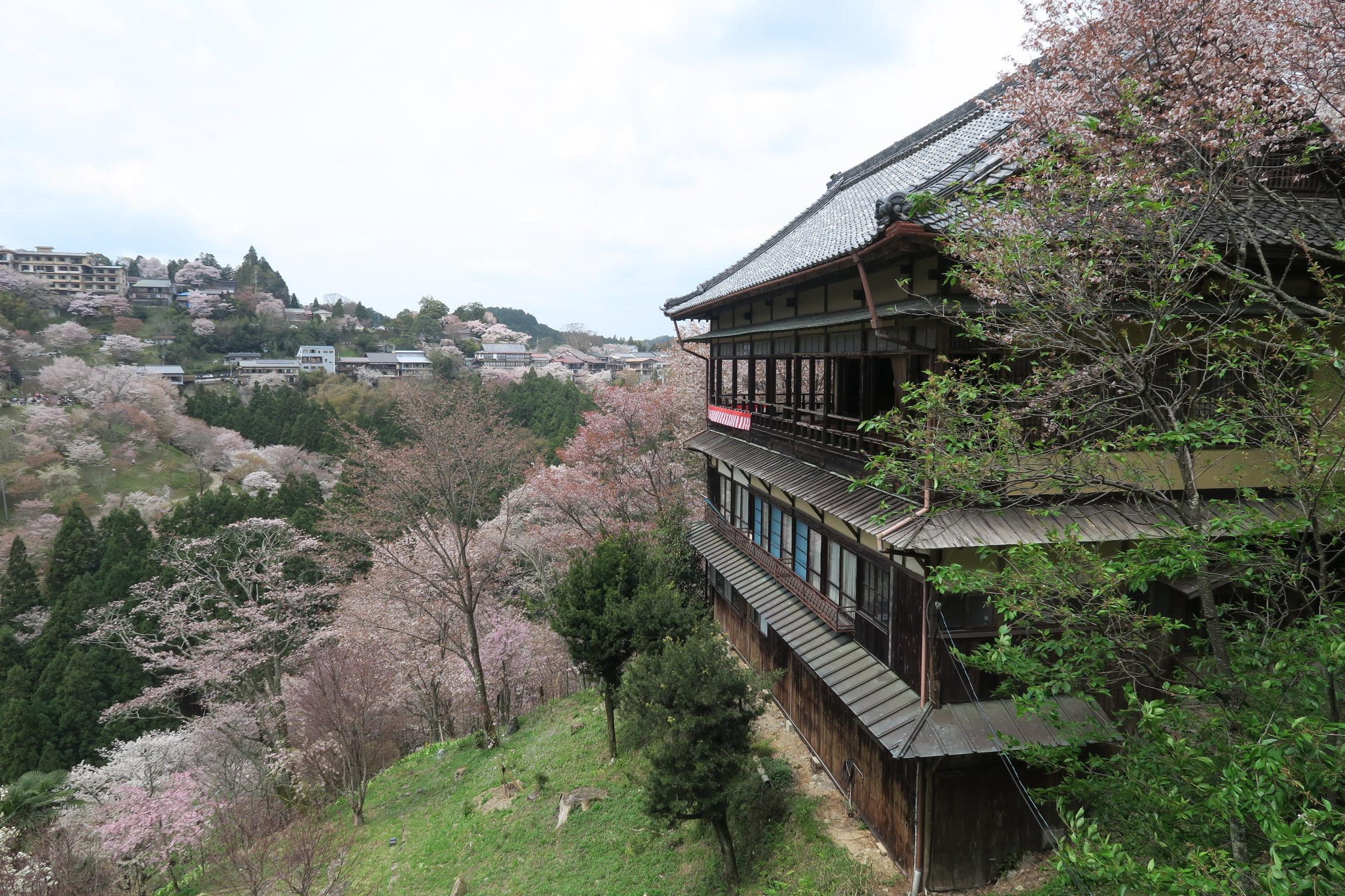 吉野ならではのお茶処。ここから観る景色はおすすめ。蔵王堂前の通りに比べて、人も少ないので穴場かもなぁ