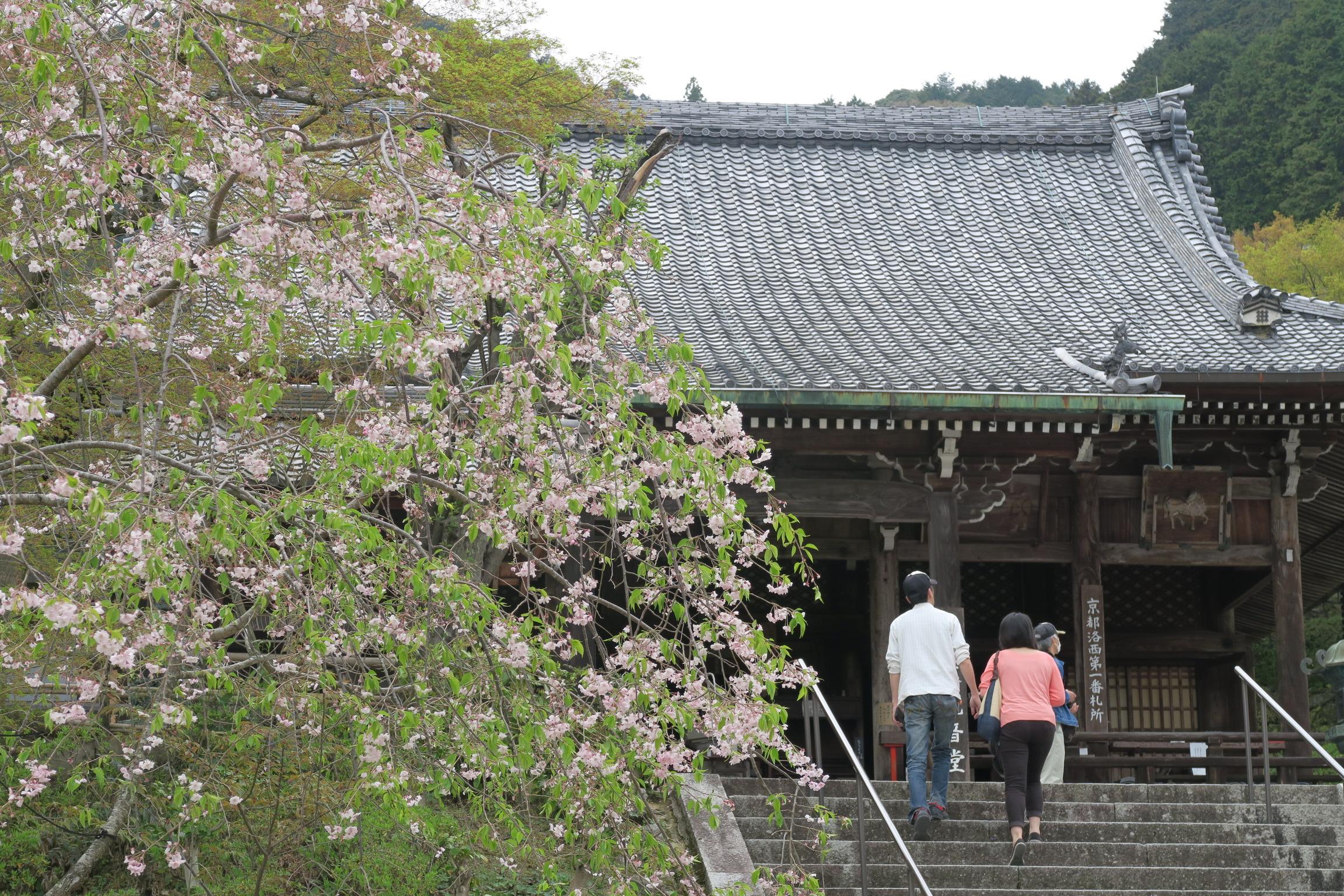 観音堂(本堂)。よかったぁ、桜も少し残っていました。