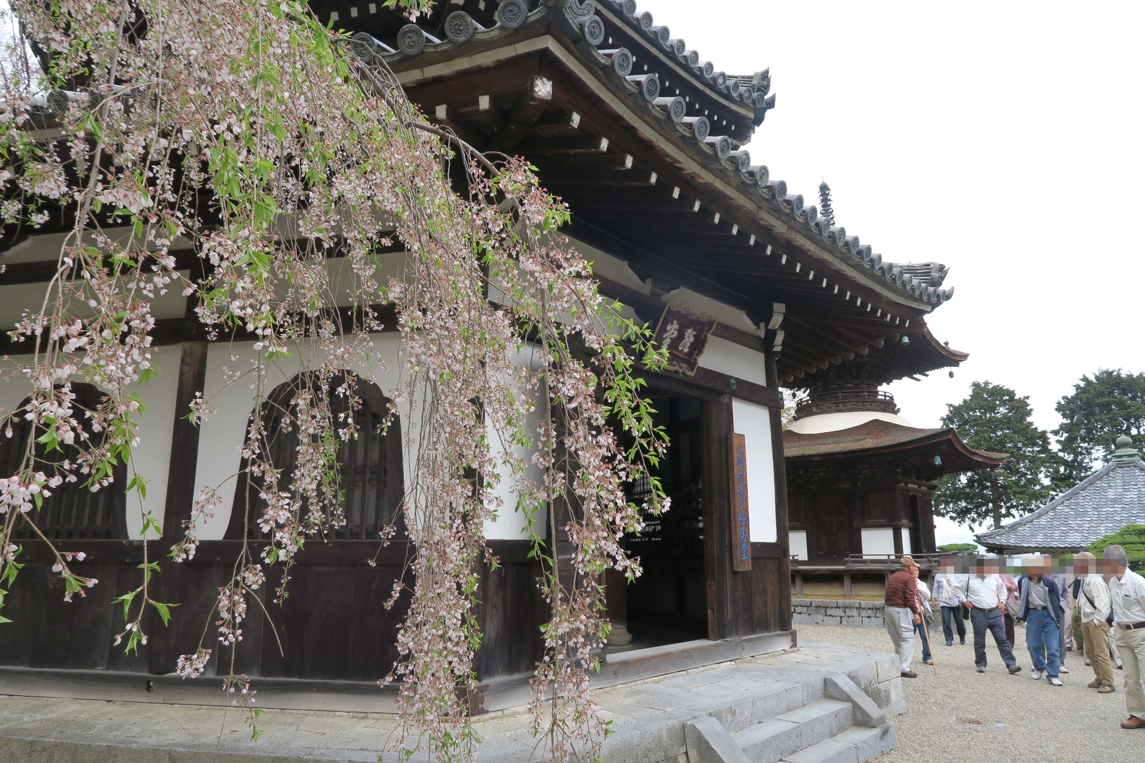 経堂と多宝塔前のしだれ桜。ここの桜が満開のときに訪れてみたいですね。
