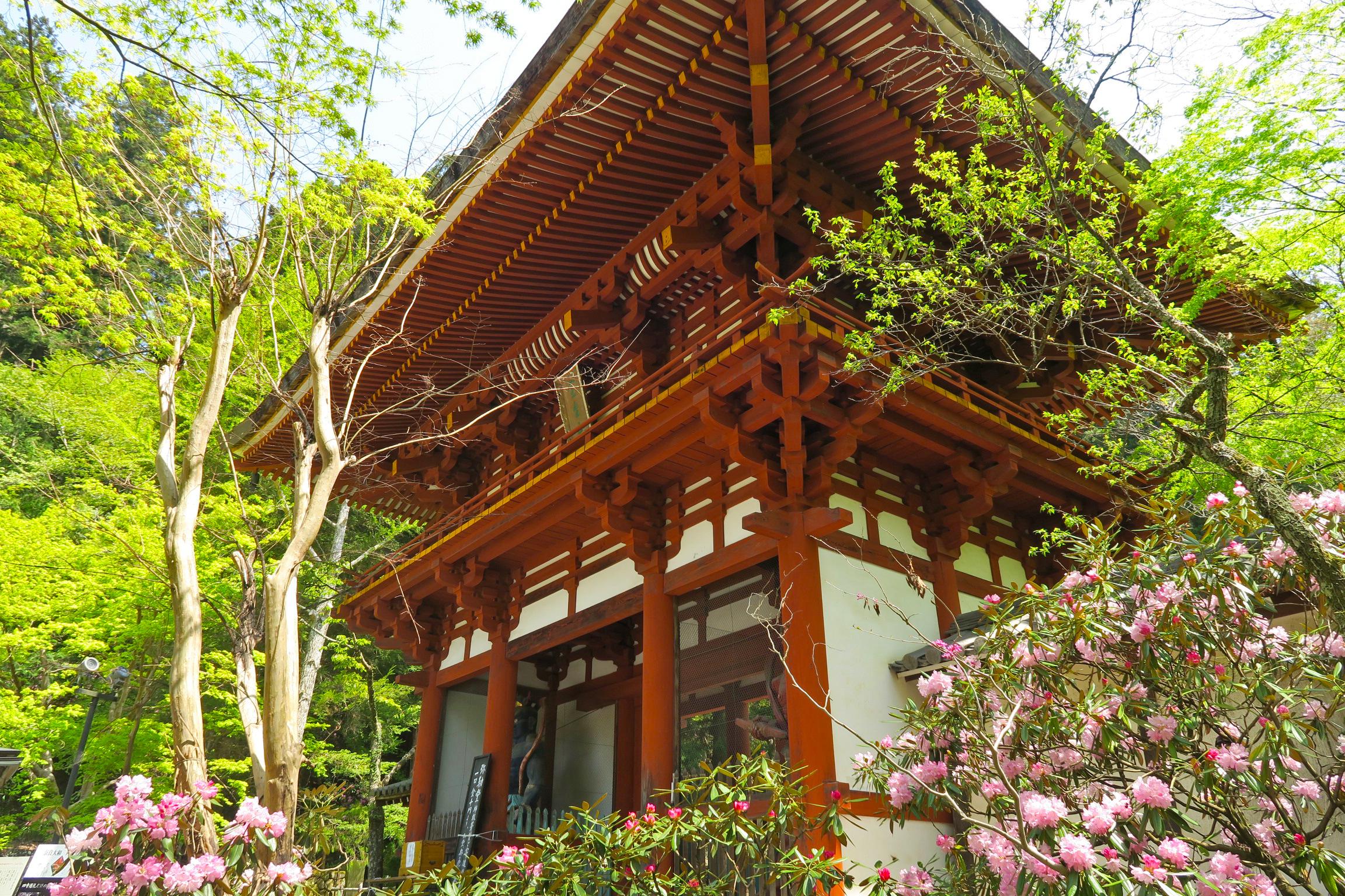 参拝受付のあと、すぐ見えてくる仁王門。昭和40年に再建されたもの。門の回りもシャクナゲが咲いています