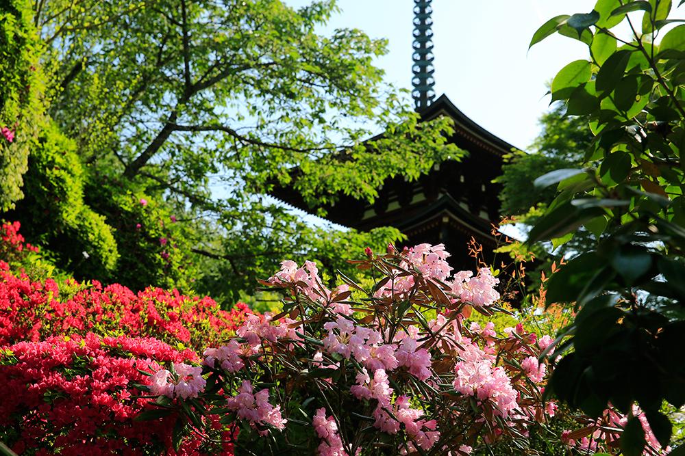昭和61年に再建された岡寺の三重塔。