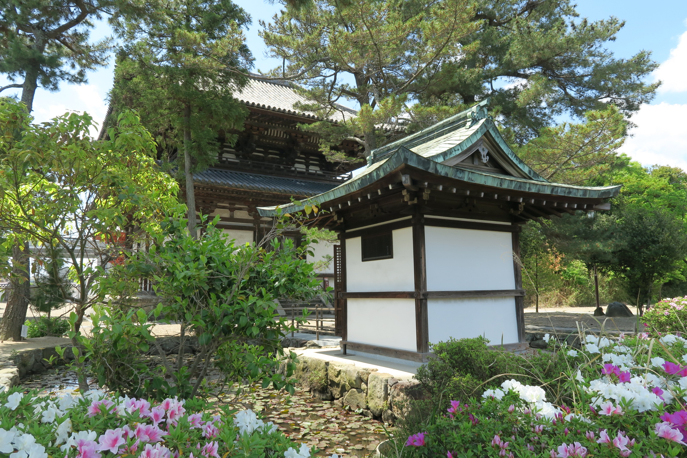 喜光寺の本堂裏にはツツジの花が満開でした。