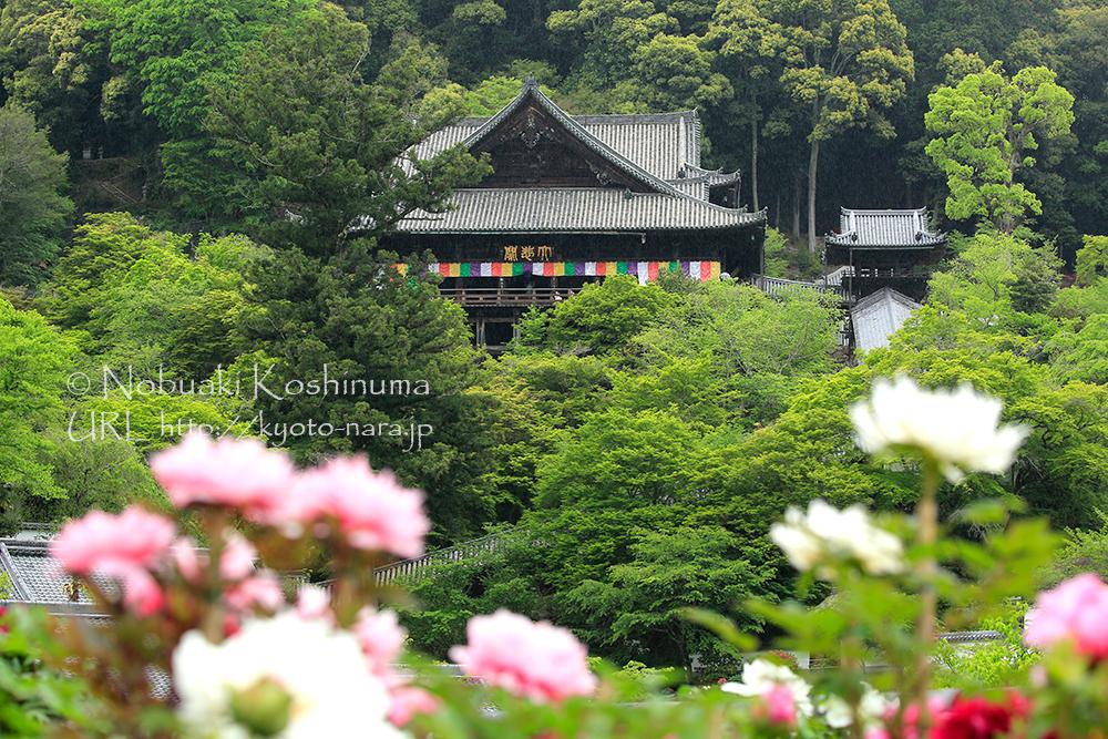 長谷寺の牡丹まつりに行ってきました!