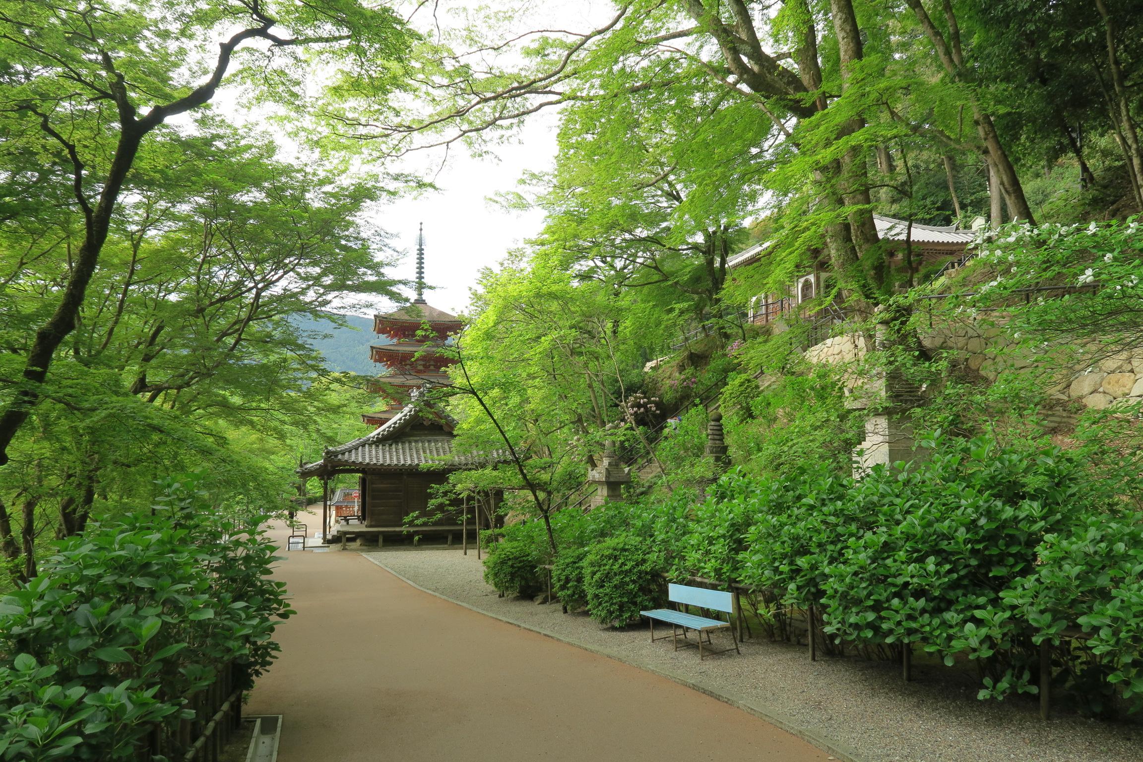 奥に見えるのが五重塔と本長谷寺。