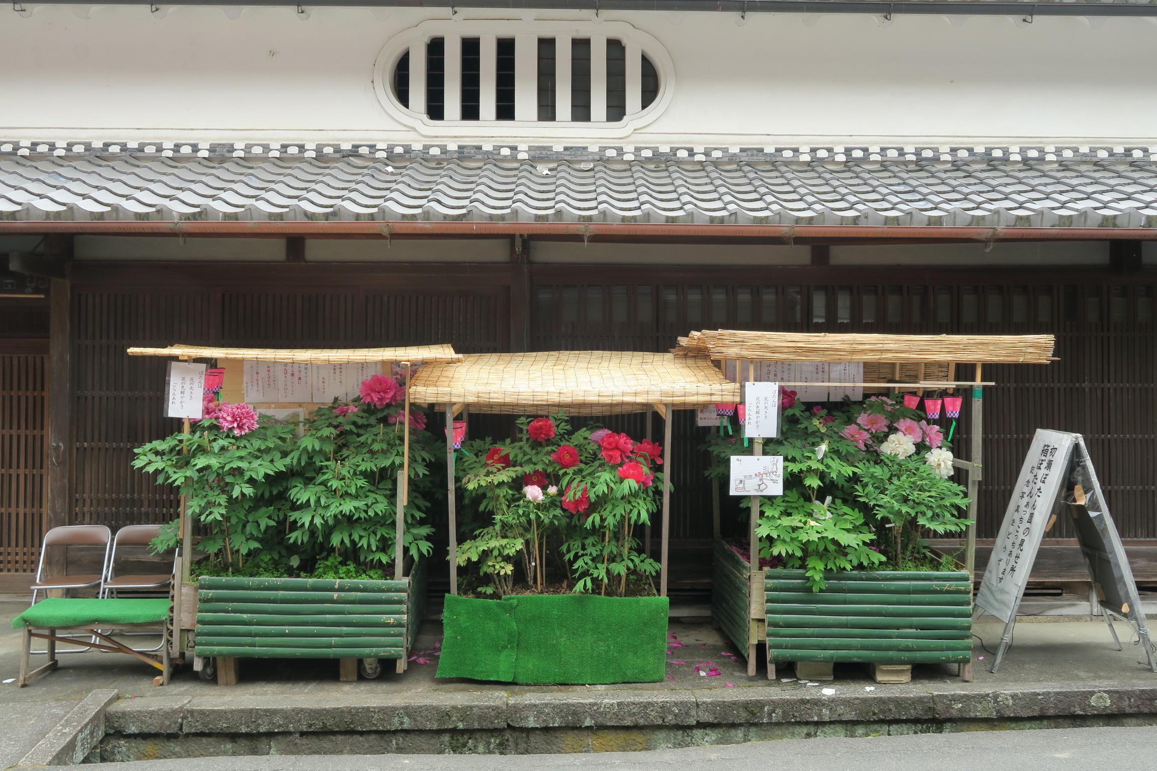 長谷寺の牡丹まつりでは、写真のような「箱ぼたん」が町のあちこちに設置されています。