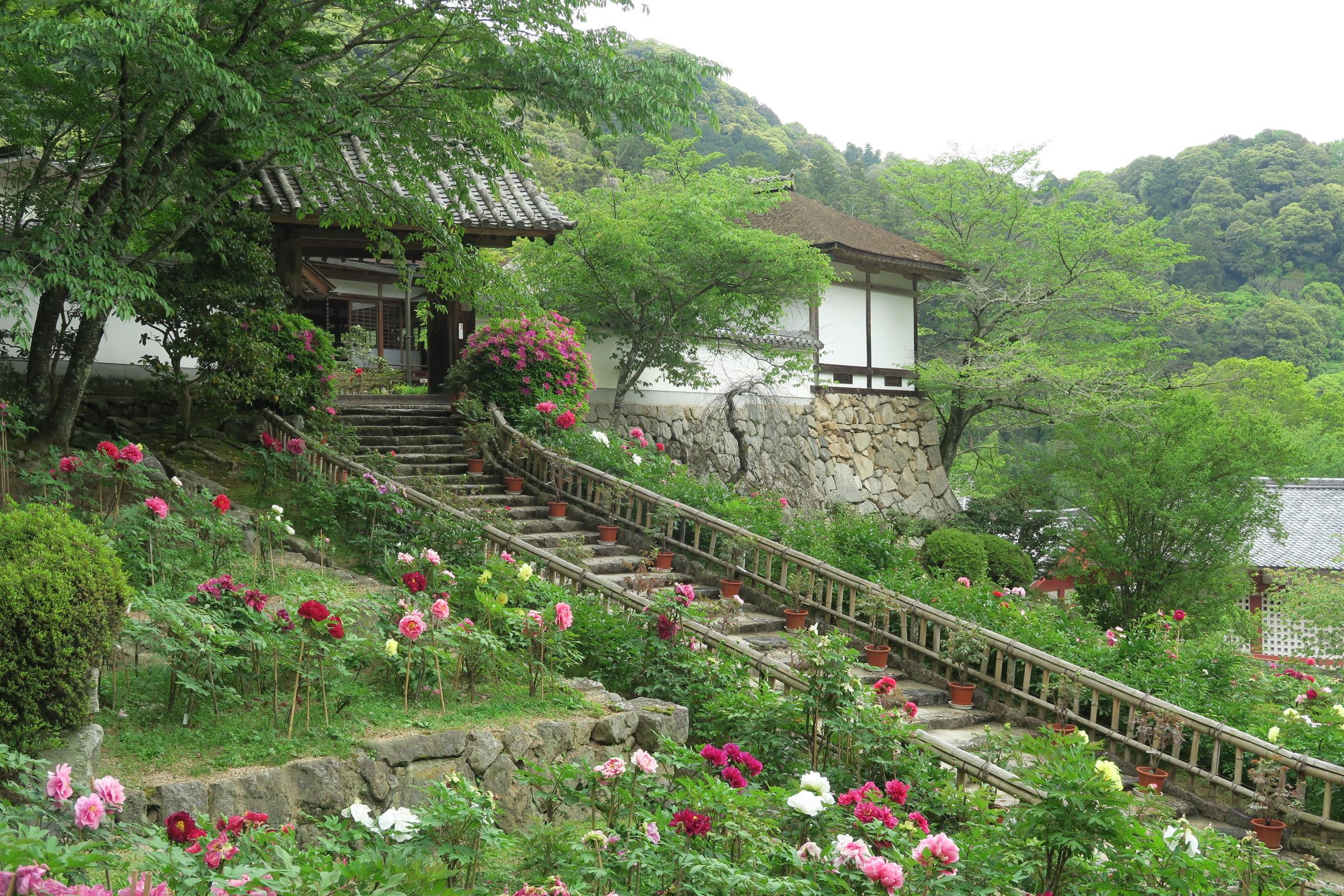 新緑に包まれたお茶処。石垣、階段、牡丹の花が調和してきれいですね。