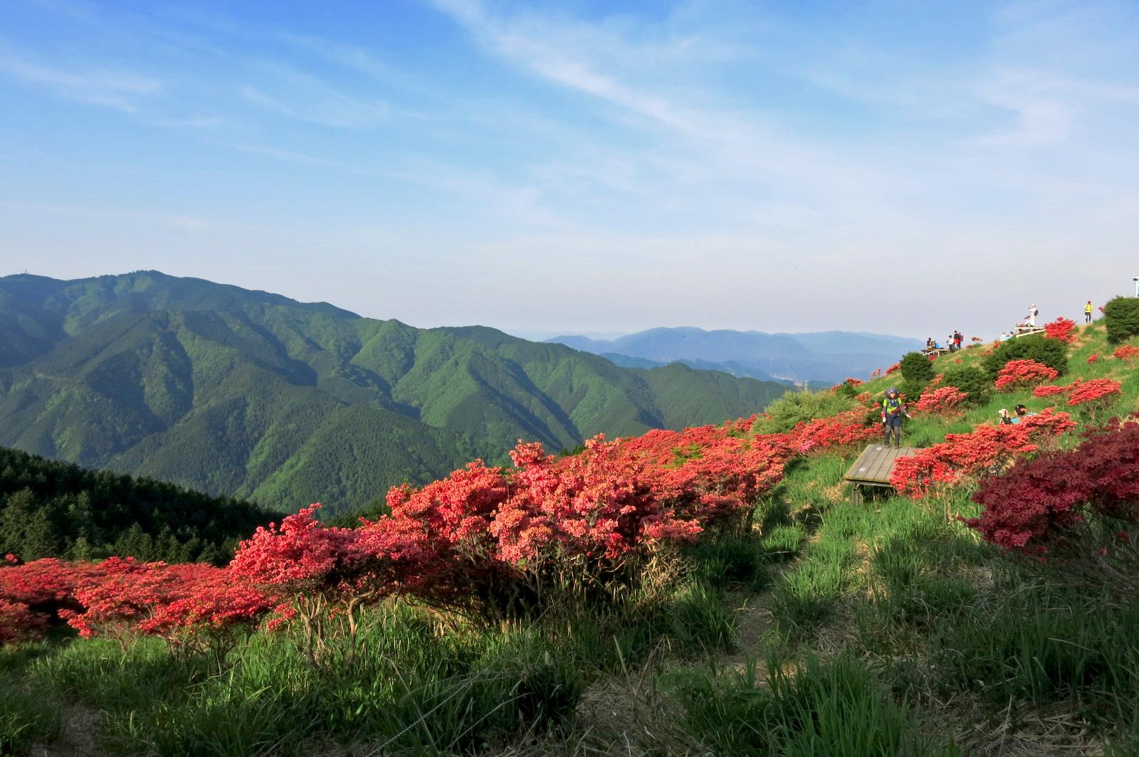 絶景!御所市にある葛城山に行ってきました。一目百万本といわれるヤマツツジが満開でした!