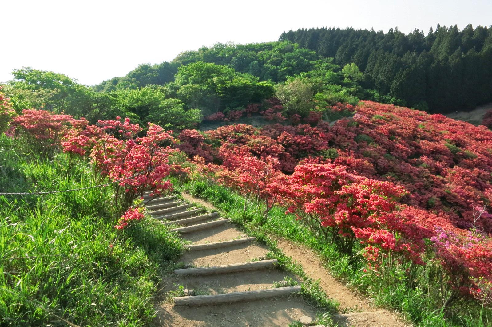 展望所から花畑を散策できるよう整備されていますので、ぜひお楽しみください。