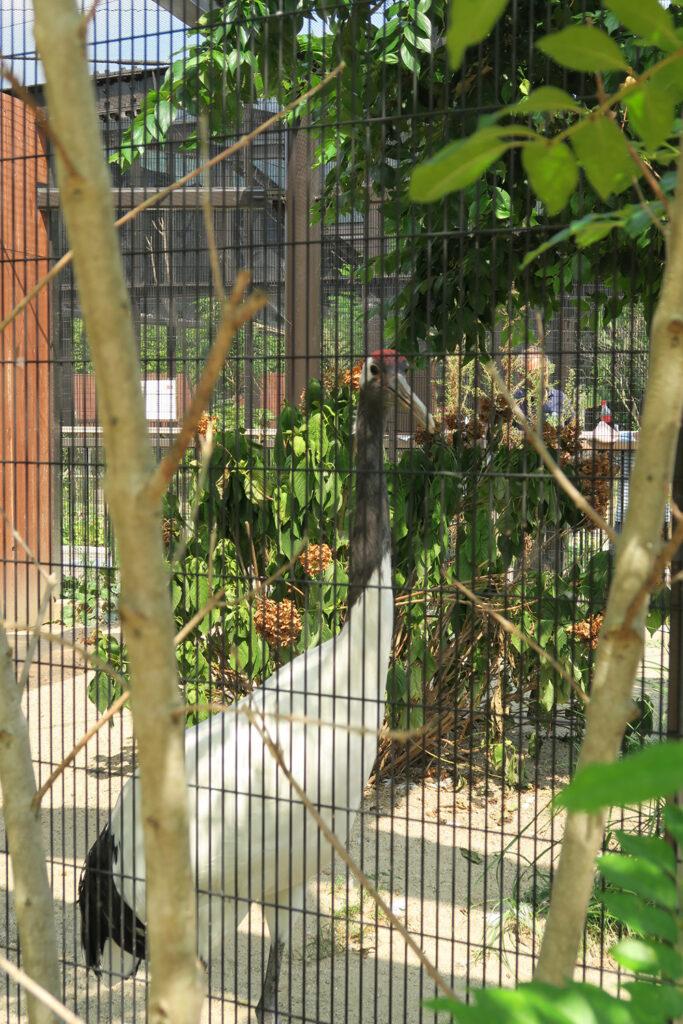 京都市動物園 ツル