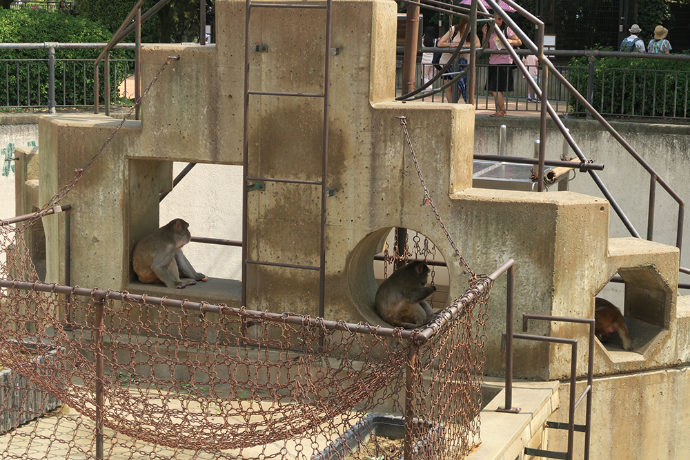 京都市動物園 猿 サル
