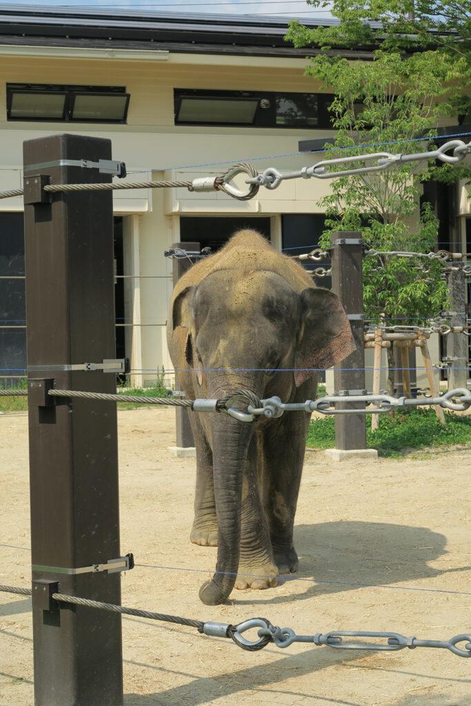 京都市動物園 ゾウ