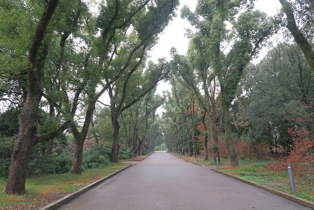 京都府立植物園 くすのき並木