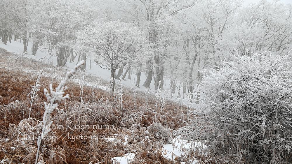 明神平 雪景色