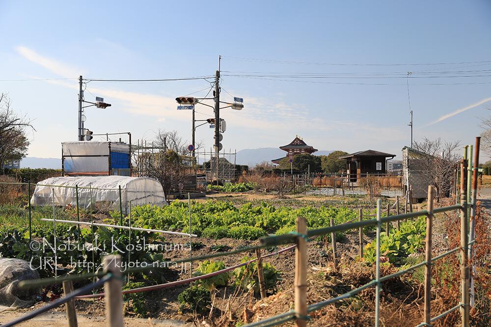 平城宮跡と畑