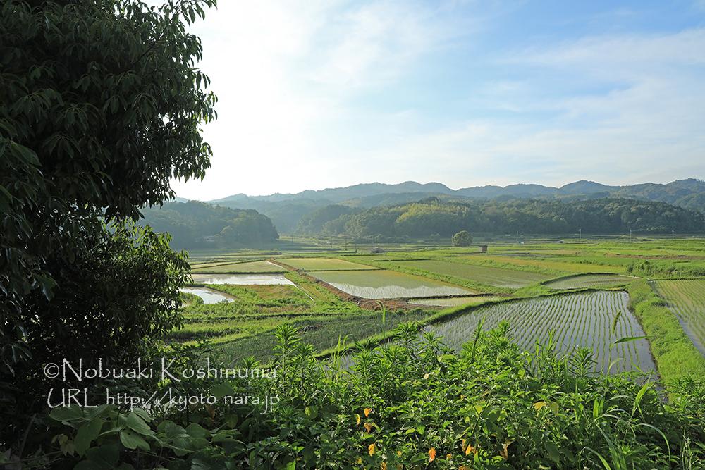岩船寺 田園風景