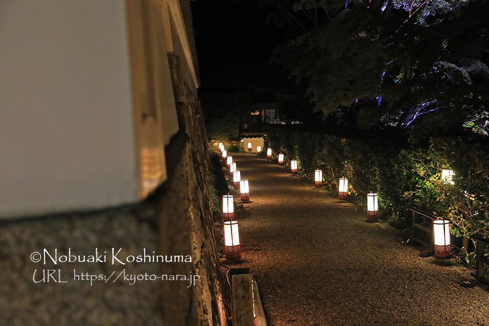 海住山寺 ライトアップ