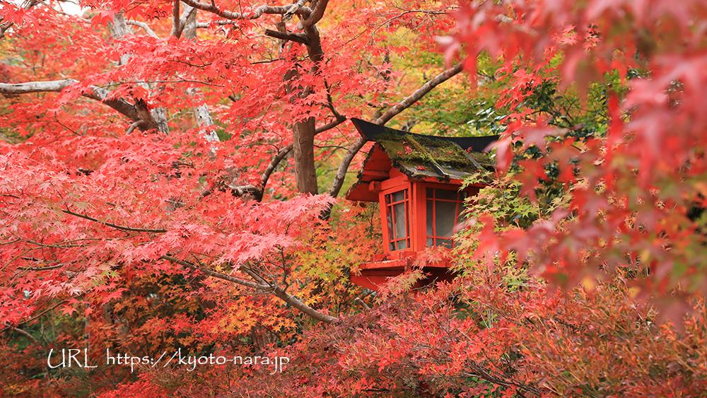鍬山神社 紅葉