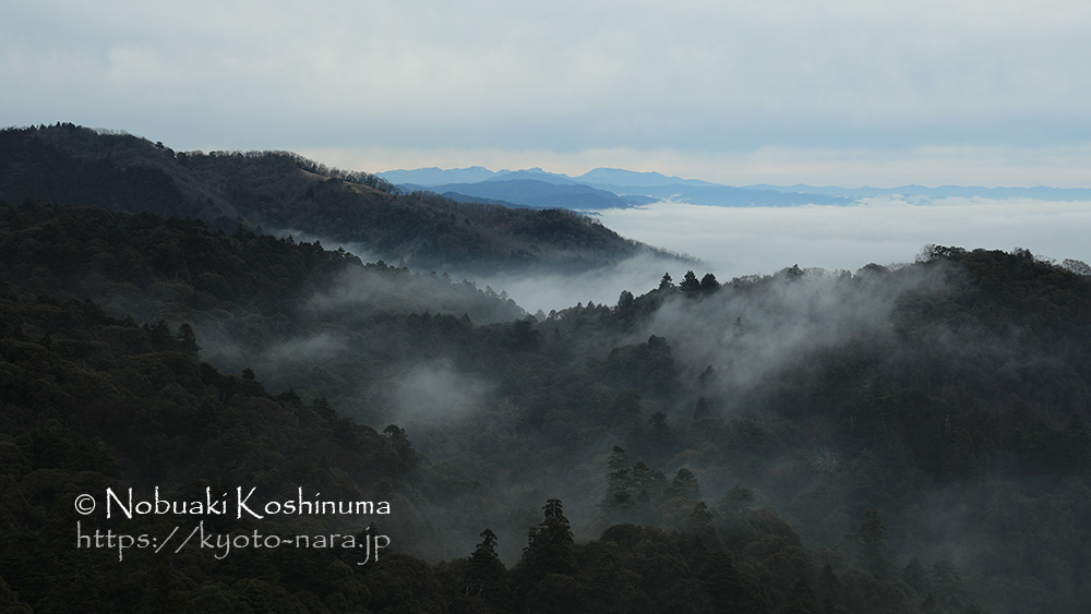 World Heritage Kasugayama Primitive Forest Wrapped in Fog