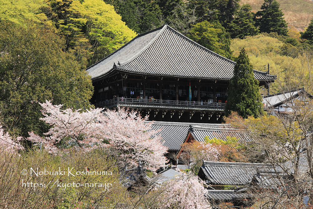 奈良 世界遺産 / 東大寺
